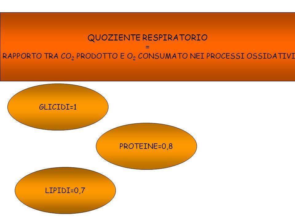 QUOZIENTE RESPIRATORIO = RAPPORTO TRA CO 2 PRODOTTO E O 2 CONSUMATO NEI PROCESSI OSSIDATIVI GLICIDI=1 PROTEINE=0,8 LIPIDI=0,7