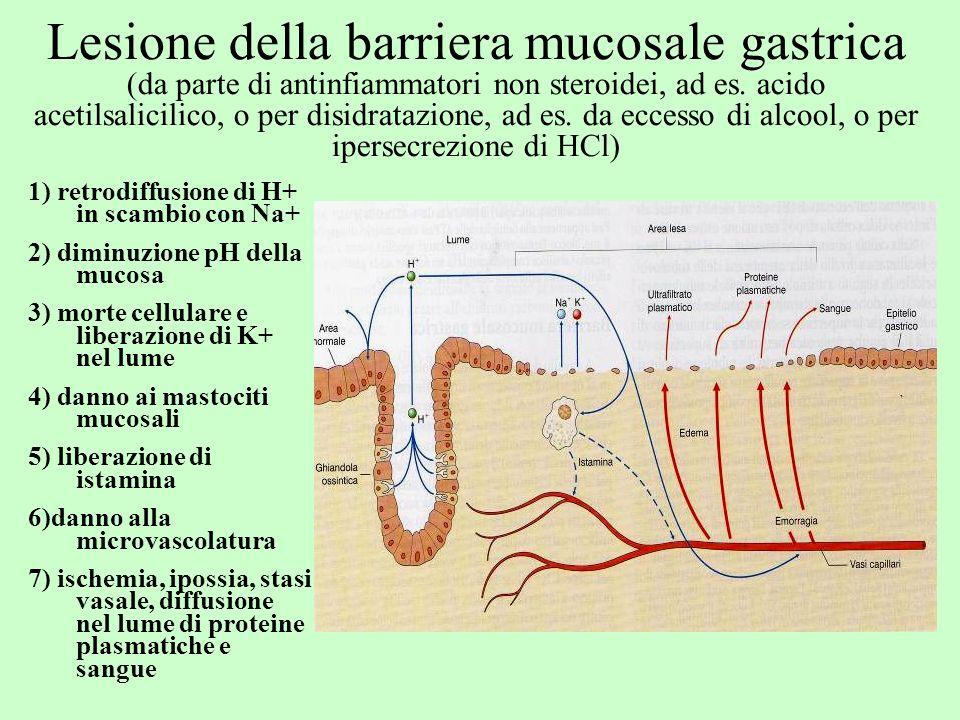 Lesione della barriera mucosale gastrica (da parte di antinfiammatori non steroidei, ad es. acido acetilsalicilico, o per disidratazione, ad es. da ec