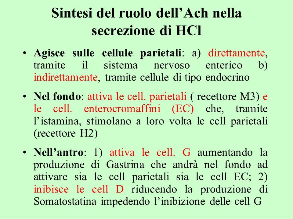 Sintesi del ruolo dellAch nella secrezione di HCl Agisce sulle cellule parietali: a) direttamente, tramite il sistema nervoso enterico b) indirettamen