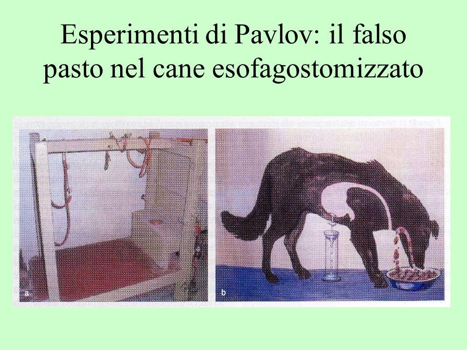 Esperimenti di Pavlov: il falso pasto nel cane esofagostomizzato