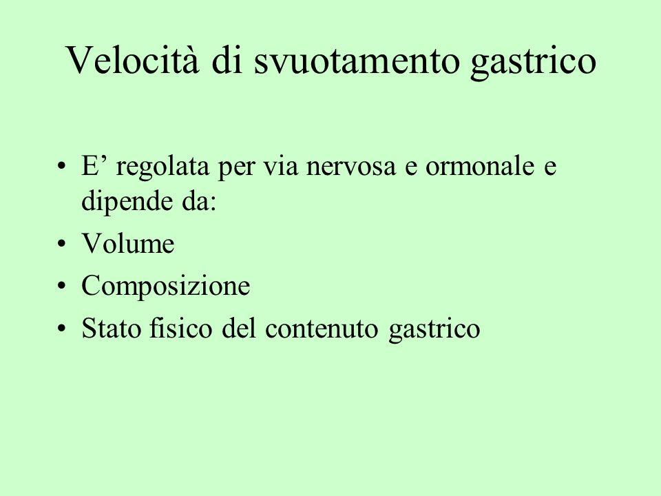 Velocità di svuotamento gastrico E regolata per via nervosa e ormonale e dipende da: Volume Composizione Stato fisico del contenuto gastrico