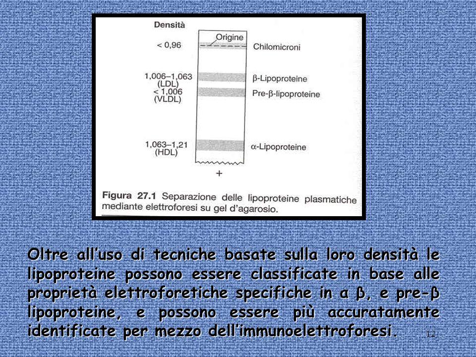 12 Oltre alluso di tecniche basate sulla loro densità le lipoproteine possono essere classificate in base alle proprietà elettroforetiche specifiche i