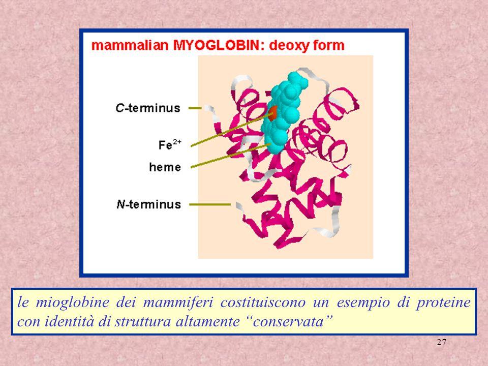 27 le mioglobine dei mammiferi costituiscono un esempio di proteine con identità di struttura altamente conservata