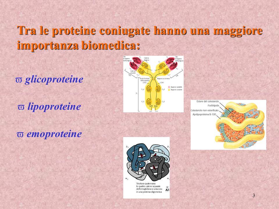 3 Tra le proteine coniugate hanno una maggiore importanza biomedica: glicoproteine lipoproteine emoproteine