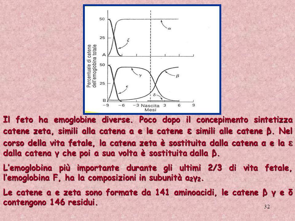 32 Il feto ha emoglobine diverse. Poco dopo il concepimento sintetizza catene zeta, simili alla catena a e le catene ε simili alle catene β. Nel corso