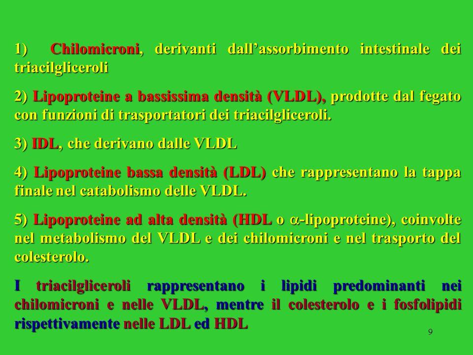 9 1) Chilomicroni, derivanti dallassorbimento intestinale dei triacilgliceroli 2) Lipoproteine a bassissima densità (VLDL), prodotte dal fegato con fu