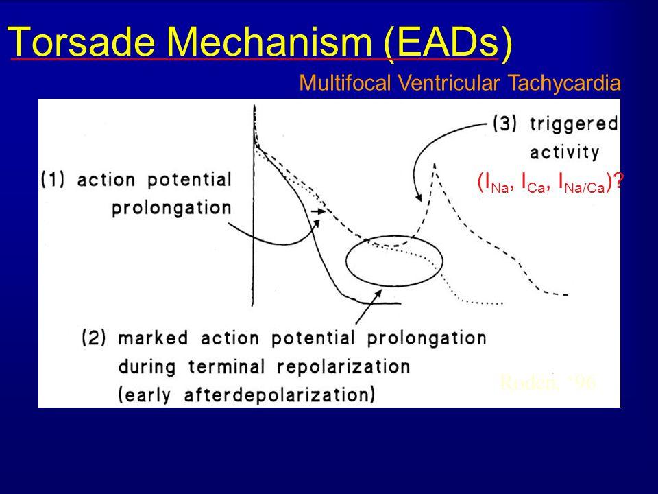 Torsade Mechanism (EADs) Roden, 96 (I Na, I Ca, I Na/Ca )? Multifocal Ventricular Tachycardia