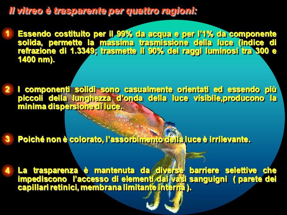 FISIOLOGIA STADIO EMBRIONARIO: Sviluppo ed accrescimento dellocchio DOPO LA NASCITA: Mantiene la trasparenza della cavità vitreale, permettendo alla luce di arrivare alla retina.