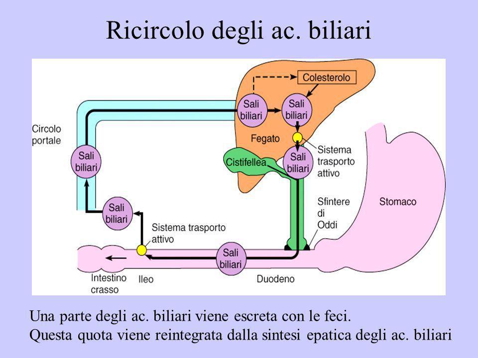 Ricircolo degli ac. biliari Una parte degli ac. biliari viene escreta con le feci. Questa quota viene reintegrata dalla sintesi epatica degli ac. bili