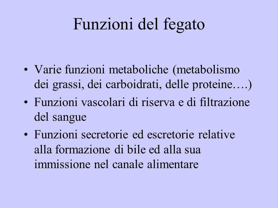 Funzioni del fegato Varie funzioni metaboliche (metabolismo dei grassi, dei carboidrati, delle proteine….) Funzioni vascolari di riserva e di filtrazi