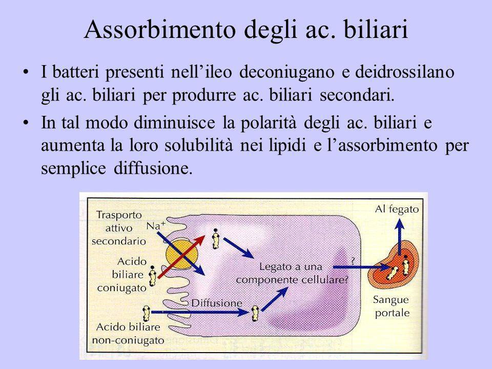 Assorbimento degli ac. biliari I batteri presenti nellileo deconiugano e deidrossilano gli ac. biliari per produrre ac. biliari secondari. In tal modo