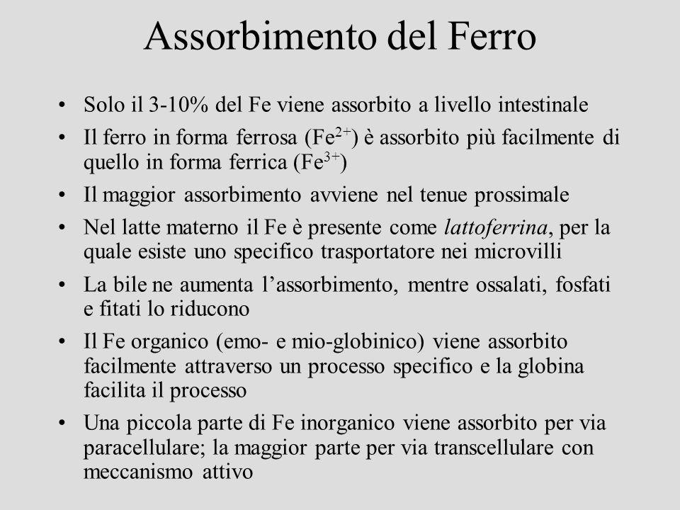 Assorbimento del Ferro Solo il 3-10% del Fe viene assorbito a livello intestinale Il ferro in forma ferrosa (Fe 2+ ) è assorbito più facilmente di que