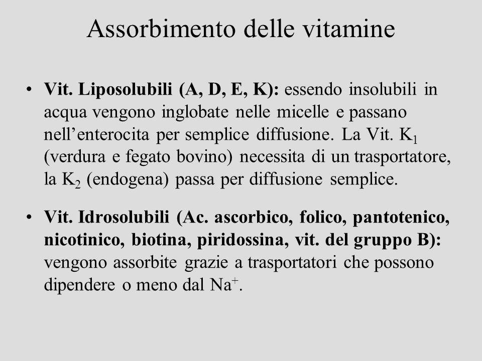 Assorbimento delle vitamine Vit. Liposolubili (A, D, E, K): essendo insolubili in acqua vengono inglobate nelle micelle e passano nellenterocita per s