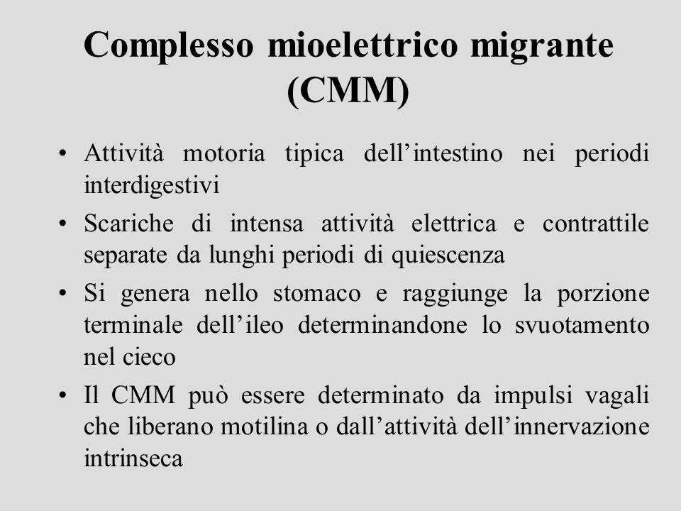 Complesso mioelettrico migrante (CMM) Attività motoria tipica dellintestino nei periodi interdigestivi Scariche di intensa attività elettrica e contra