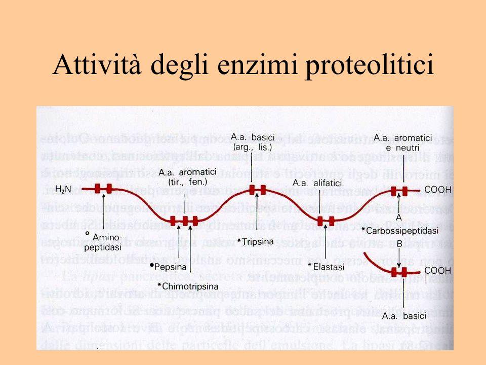 Attività degli enzimi proteolitici