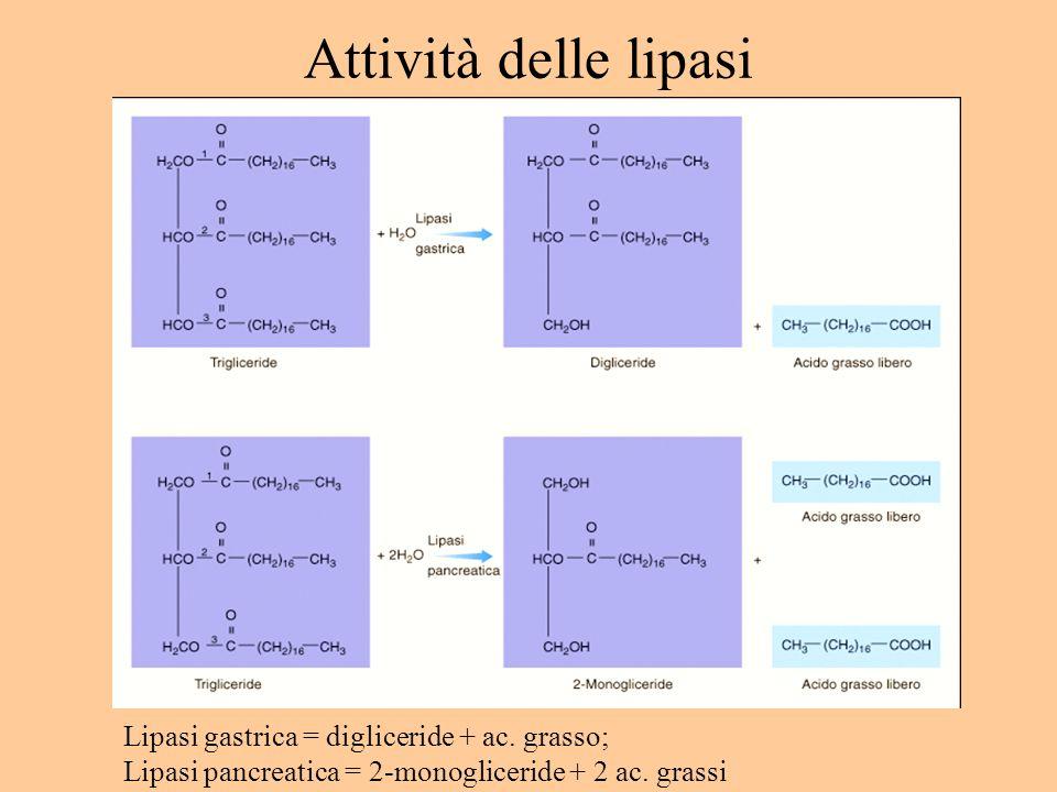 Attività delle lipasi Lipasi gastrica = digliceride + ac. grasso; Lipasi pancreatica = 2-monogliceride + 2 ac. grassi