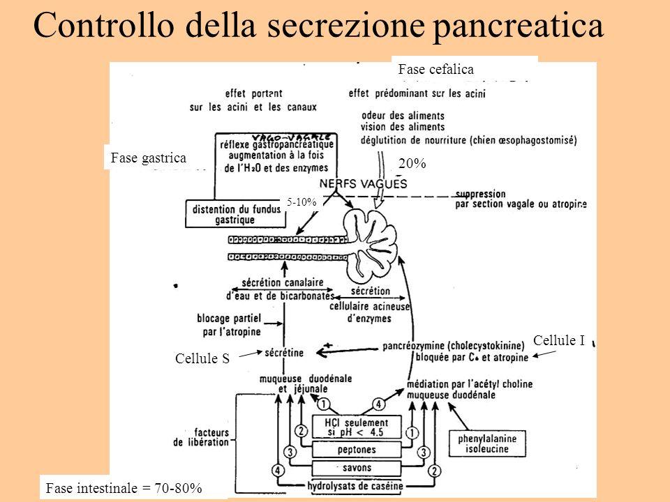 Controllo della secrezione pancreatica Fase intestinale = 70-80% Fase cefalica Fase gastrica Cellule I Cellule S 20% 5-10%