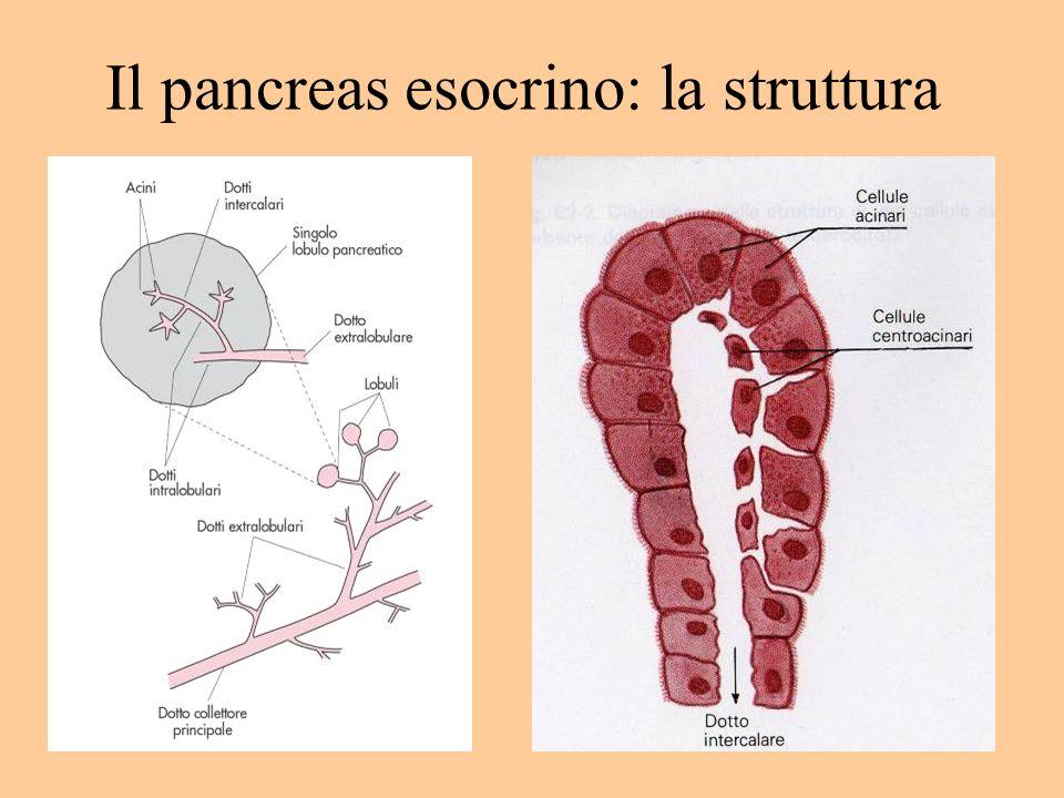Attività delle lipasi Lipasi gastrica = digliceride + ac.