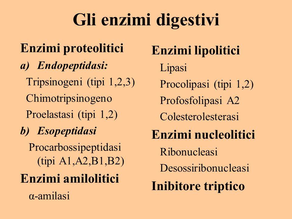 Gli enzimi digestivi Enzimi proteolitici a)Endopeptidasi: Tripsinogeni (tipi 1,2,3) Chimotripsinogeno Proelastasi (tipi 1,2) b)Esopeptidasi Procarboss
