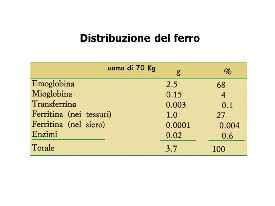 Distribuzione del ferro uomo di 70 Kg