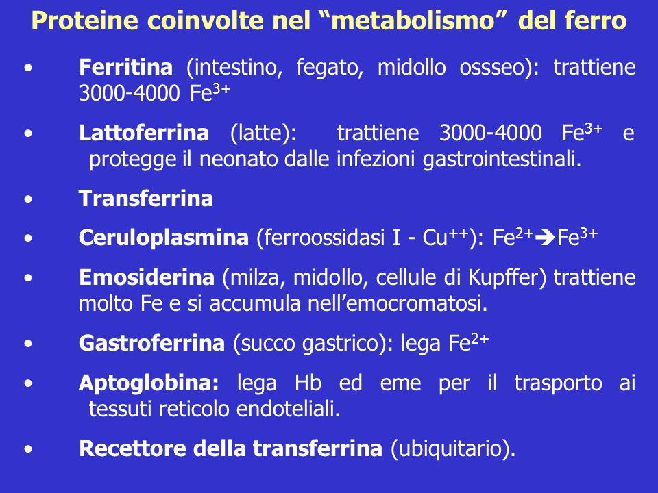Proteine coinvolte nel metabolismo del ferro Ferritina (intestino, fegato, midollo ossseo): trattiene 3000-4000 Fe 3+ Lattoferrina (latte): trattiene