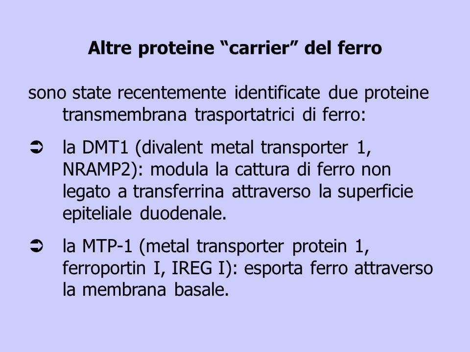 Altre proteine carrier del ferro sono state recentemente identificate due proteine transmembrana trasportatrici di ferro: Üla DMT1 (divalent metal tra