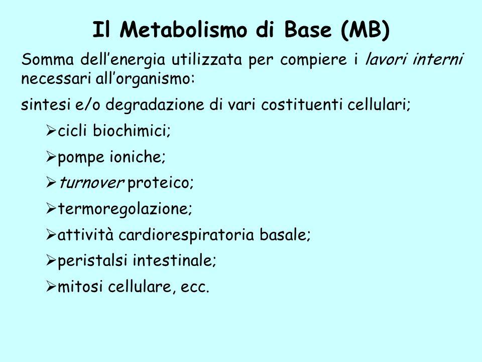 Il Metabolismo di Base (MB) Somma dellenergia utilizzata per compiere i lavori interni necessari allorganismo: sintesi e/o degradazione di vari costit