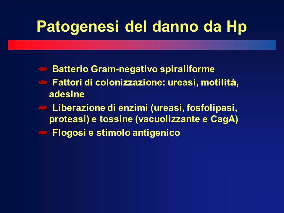 Patogenesi del danno da Hp Batterio Gram-negativo spiraliforme Fattori di colonizzazione: ureasi, motilit à, adesine Liberazione di enzimi (ureasi, fo