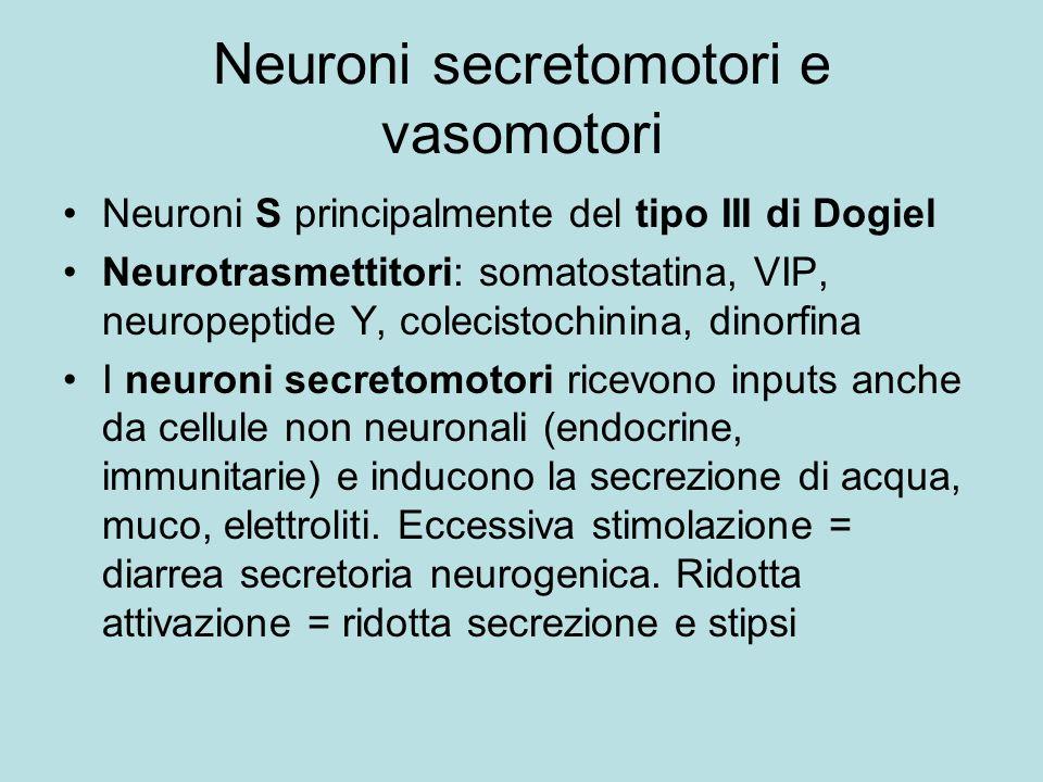Neuroni secretomotori e vasomotori Neuroni S principalmente del tipo III di Dogiel Neurotrasmettitori: somatostatina, VIP, neuropeptide Y, colecistoch