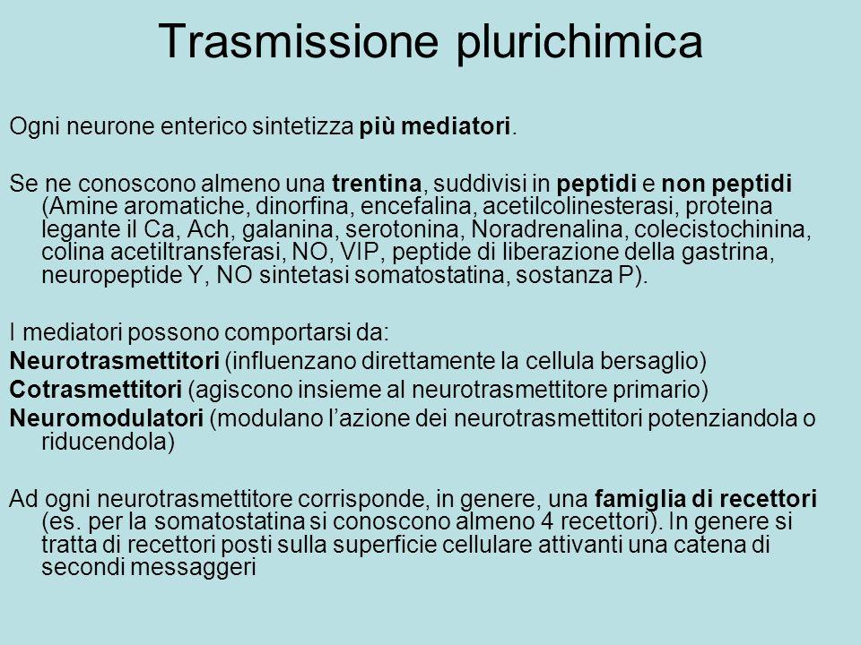 Trasmissione plurichimica Ogni neurone enterico sintetizza più mediatori. Se ne conoscono almeno una trentina, suddivisi in peptidi e non peptidi (Ami