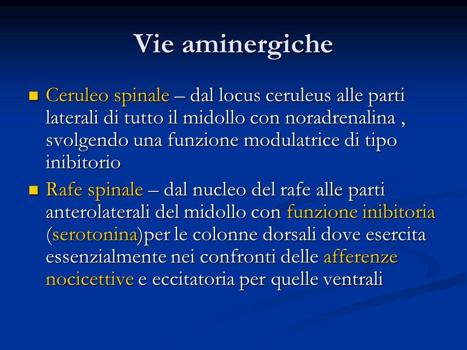 Vie aminergiche Ceruleo spinale – dal locus ceruleus alle parti laterali di tutto il midollo con noradrenalina, svolgendo una funzione modulatrice di