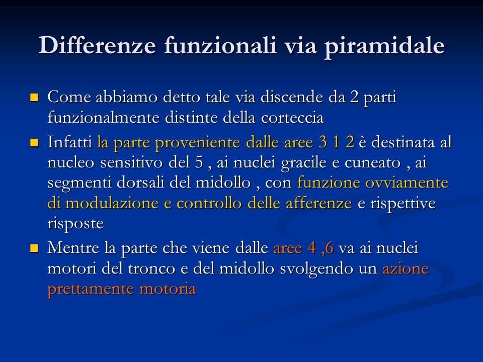 Differenze funzionali via piramidale Come abbiamo detto tale via discende da 2 parti funzionalmente distinte della corteccia Come abbiamo detto tale v