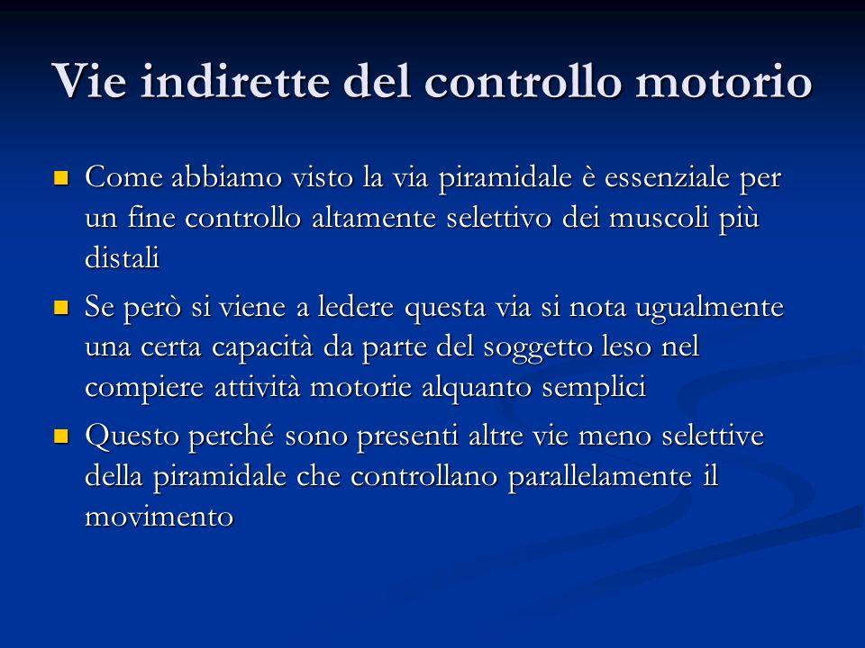 Vie indirette del controllo motorio Come abbiamo visto la via piramidale è essenziale per un fine controllo altamente selettivo dei muscoli più distal