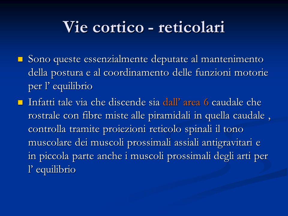 Vie cortico - reticolari Sono queste essenzialmente deputate al mantenimento della postura e al coordinamento delle funzioni motorie per l equilibrio