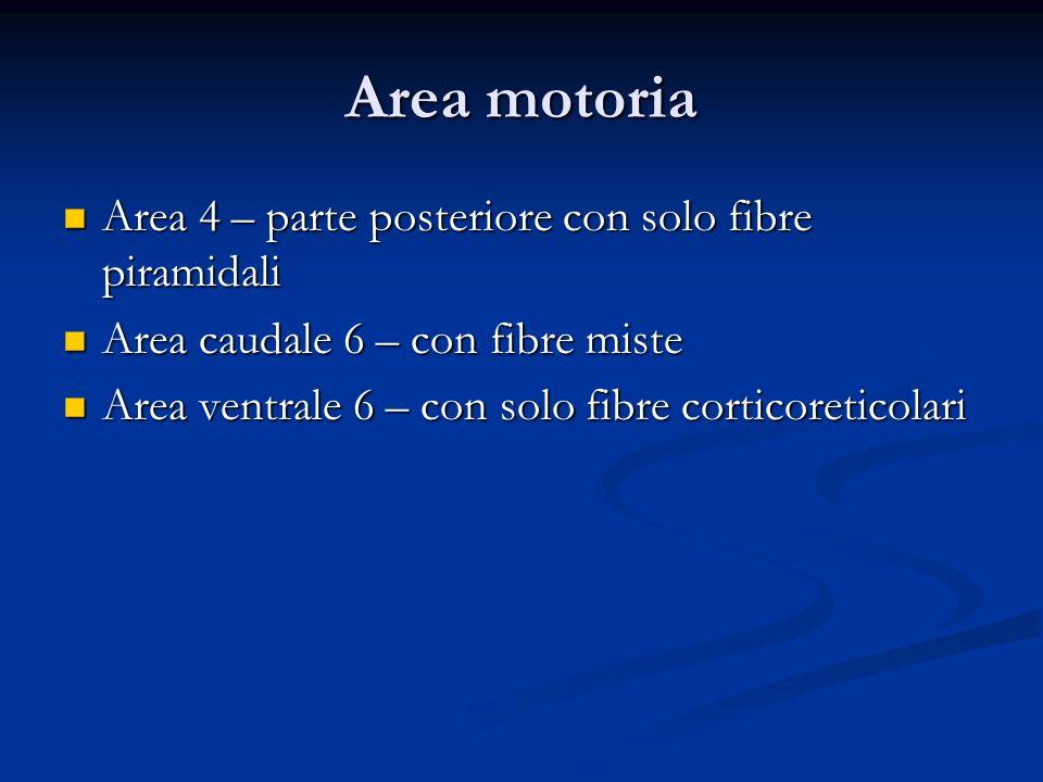 Area motoria Area 4 – parte posteriore con solo fibre piramidali Area 4 – parte posteriore con solo fibre piramidali Area caudale 6 – con fibre miste