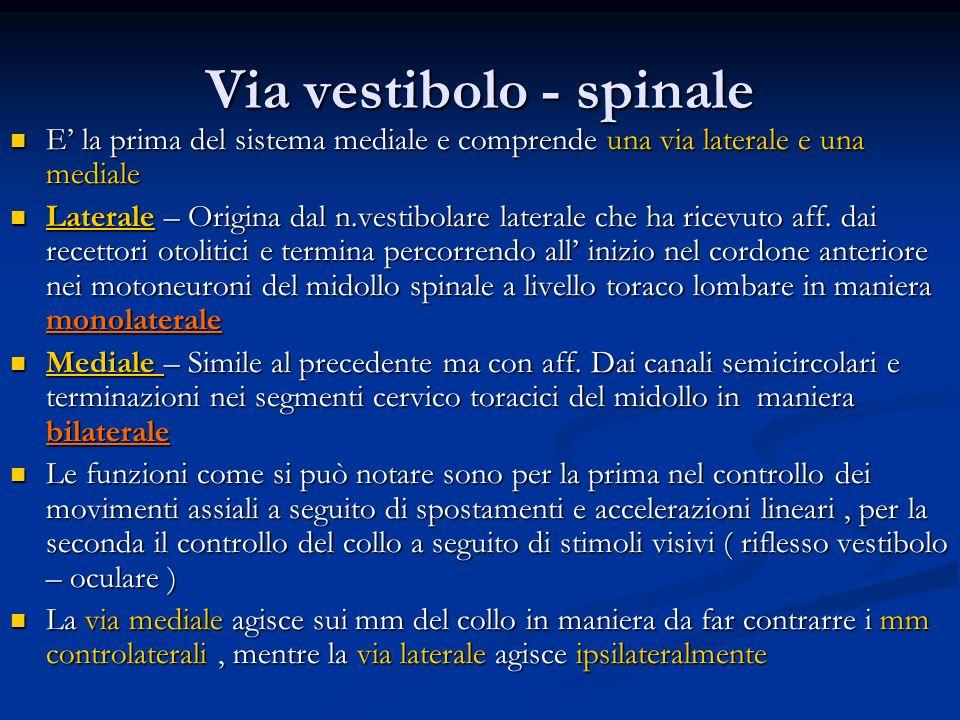 Via vestibolo - spinale E la prima del sistema mediale e comprende una via laterale e una mediale E la prima del sistema mediale e comprende una via l