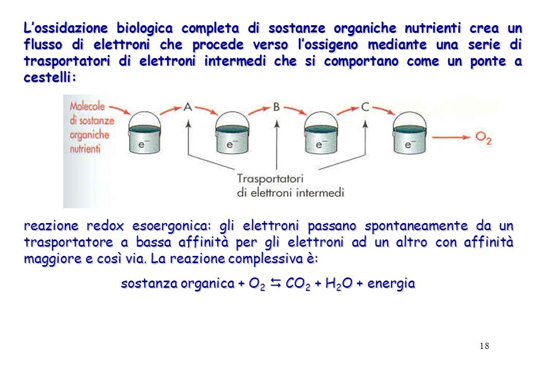 18 Lossidazione biologica completa di sostanze organiche nutrienti crea un flusso di elettroni che procede verso lossigeno mediante una serie di trasp