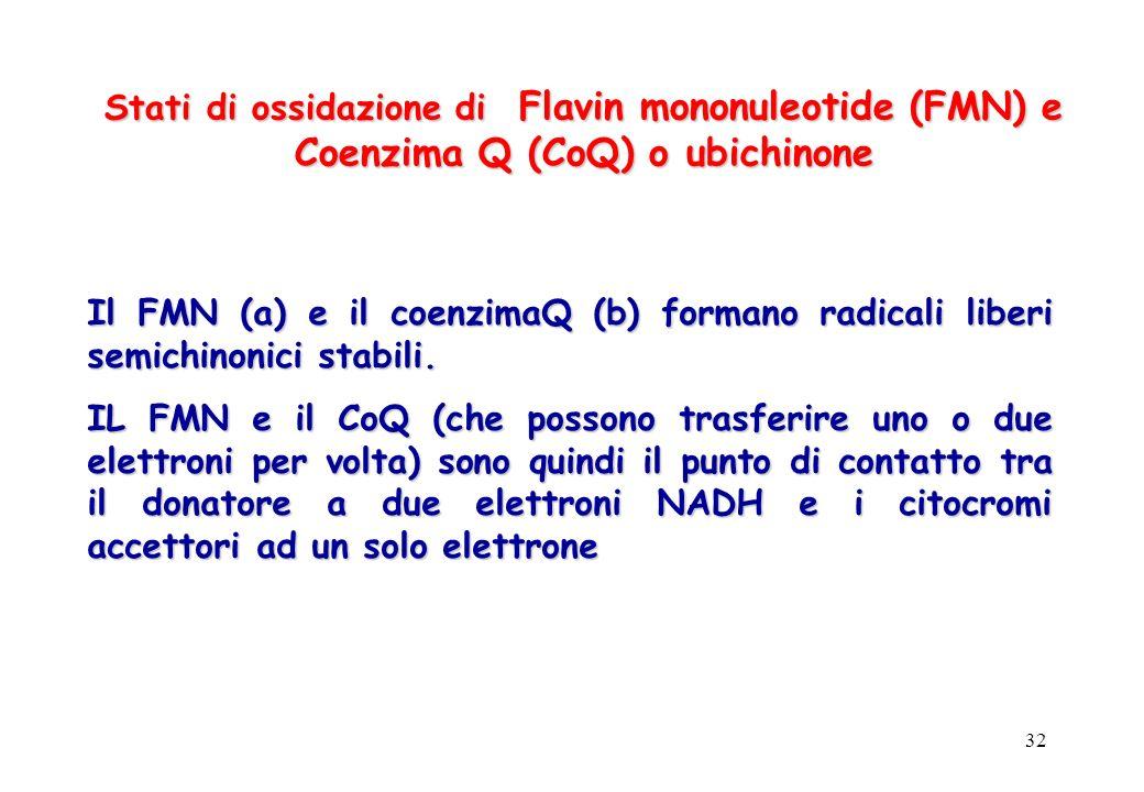 32 Stati di ossidazione di Flavin mononuleotide (FMN) e Coenzima Q (CoQ) o ubichinone Il FMN (a) e il coenzimaQ (b) formano radicali liberi semichinon