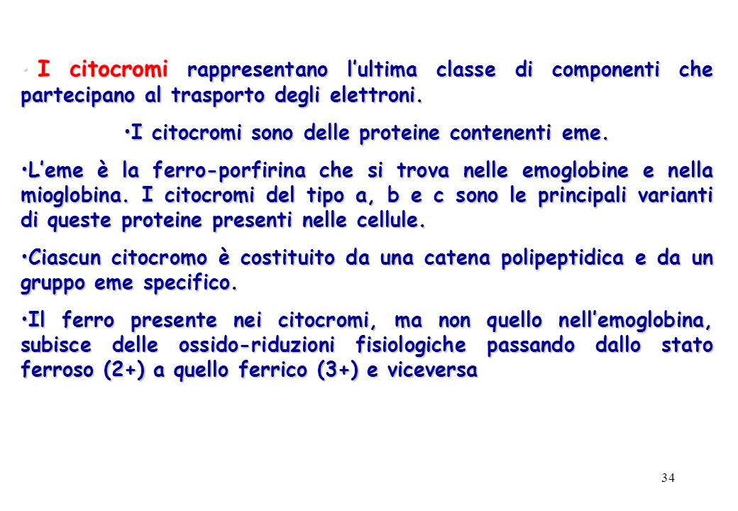 34 I citocromi rappresentano lultima classe di componenti che partecipano al trasporto degli elettroni. I citocromi rappresentano lultima classe di co