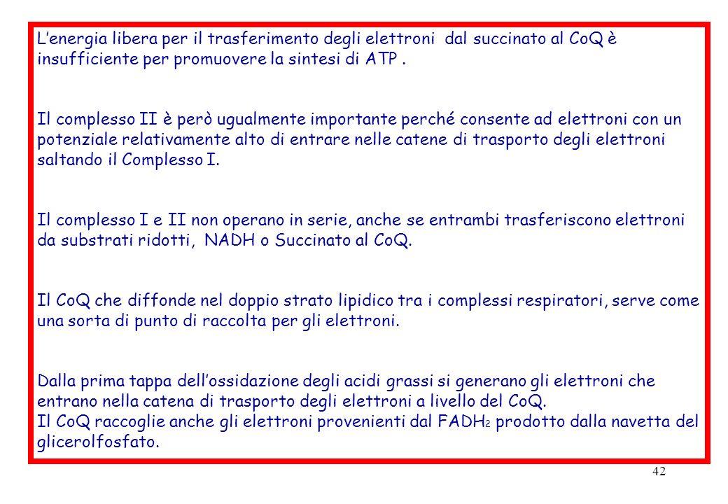 42 Lenergia libera per il trasferimento degli elettroni dal succinato al CoQ è insufficiente per promuovere la sintesi di ATP. Il complesso II è però