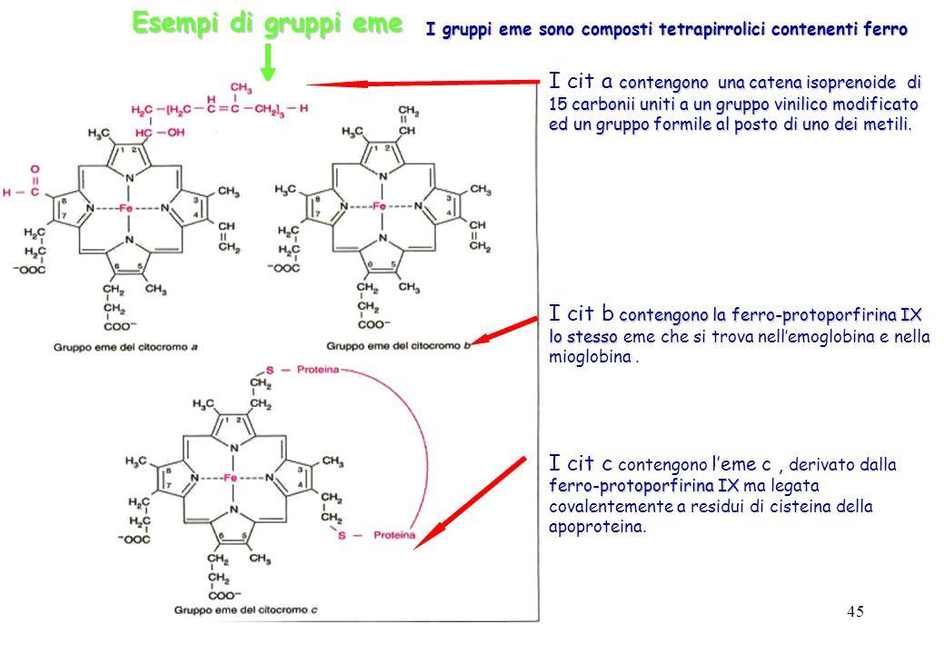 45 Esempi di gruppi eme I gruppi eme sono composti tetrapirrolici contenenti ferro contengono una catena isoprenoide di 15 carbonii uniti a un gruppo