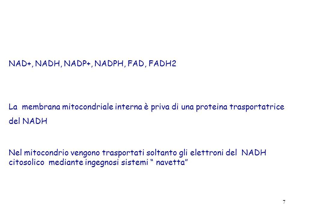 7 NAD+, NADH, NADP+, NADPH, FAD, FADH2 La membrana mitocondriale interna è priva di una proteina trasportatrice del NADH Nel mitocondrio vengono trasp