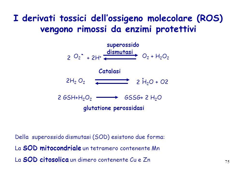75 I derivati tossici dellossigeno molecolare (ROS) vengono rimossi da enzimi protettivi O 2 -. 2 + 2H + O2O2 + H 2 O 2 superossido dismutasi H 2 O +