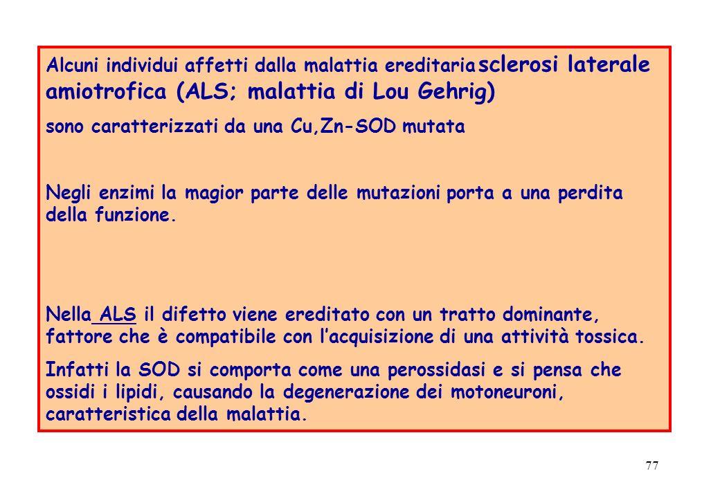77 Alcuni individui affetti dalla malattia ereditaria sclerosi laterale amiotrofica (ALS; malattia di Lou Gehrig) sono caratterizzati da una Cu,Zn-SOD