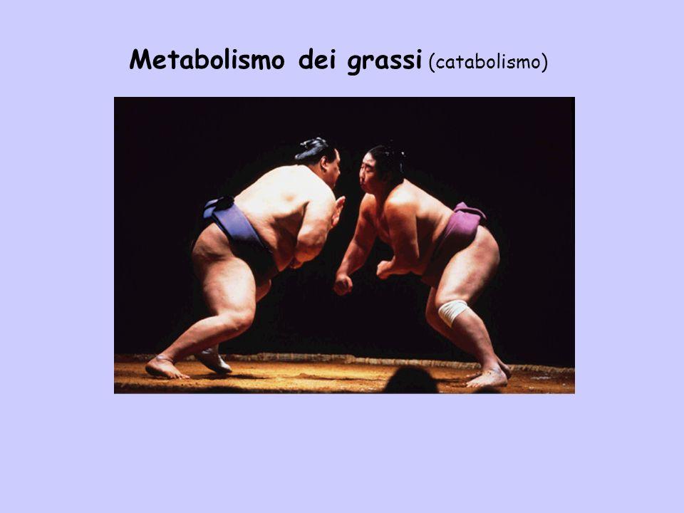 Metabolismo dei grassi (catabolismo)