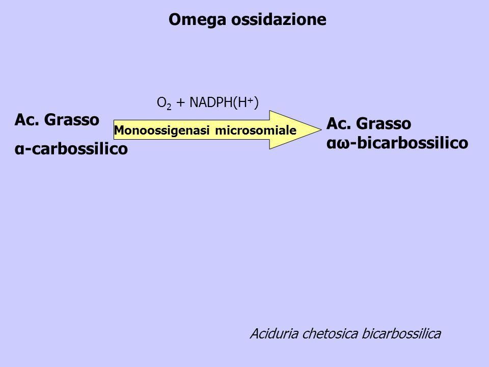 Omega ossidazione Ac. Grasso α-carbossilico Ac. Grasso αω-bicarbossilico Monoossigenasi microsomiale O 2 + NADPH(H + ) Aciduria chetosica bicarbossili