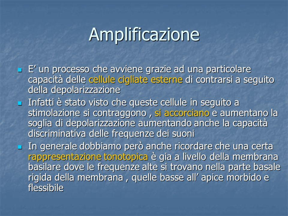 Amplificazione E un processo che avviene grazie ad una particolare capacità delle cellule cigliate esterne di contrarsi a seguito della depolarizzazio