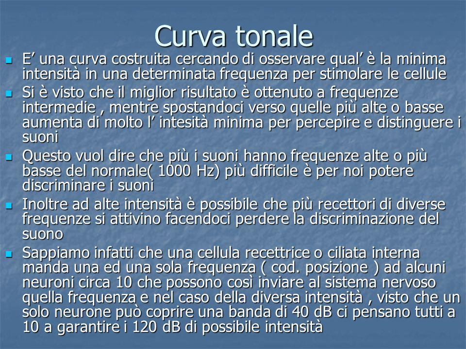 Curva tonale E una curva costruita cercando di osservare qual è la minima intensità in una determinata frequenza per stimolare le cellule E una curva