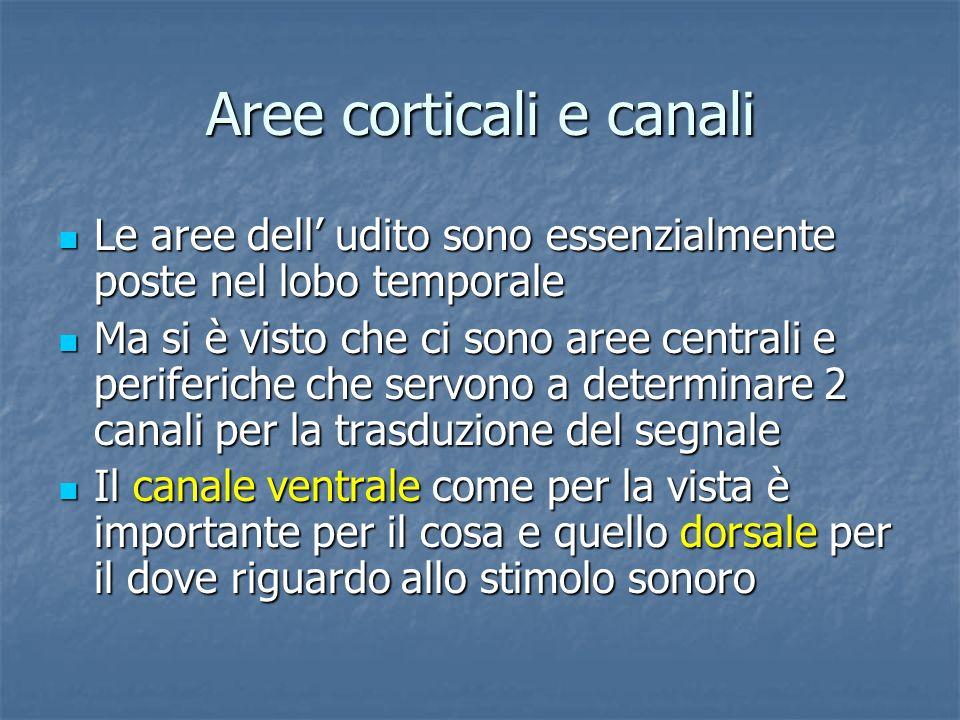 Aree corticali e canali Le aree dell udito sono essenzialmente poste nel lobo temporale Le aree dell udito sono essenzialmente poste nel lobo temporal