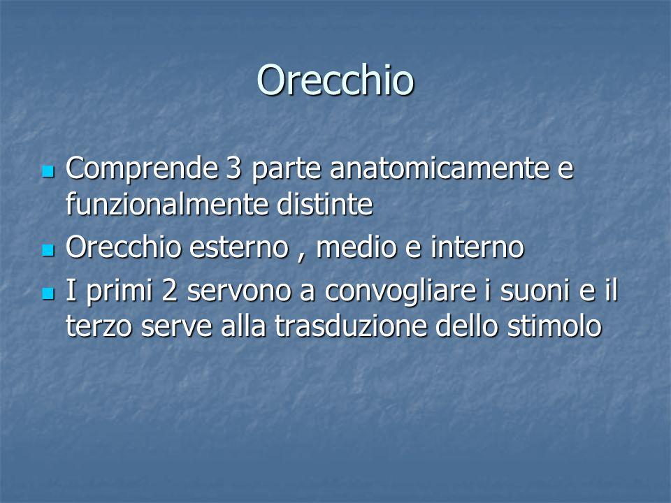 Orecchio Comprende 3 parte anatomicamente e funzionalmente distinte Comprende 3 parte anatomicamente e funzionalmente distinte Orecchio esterno, medio